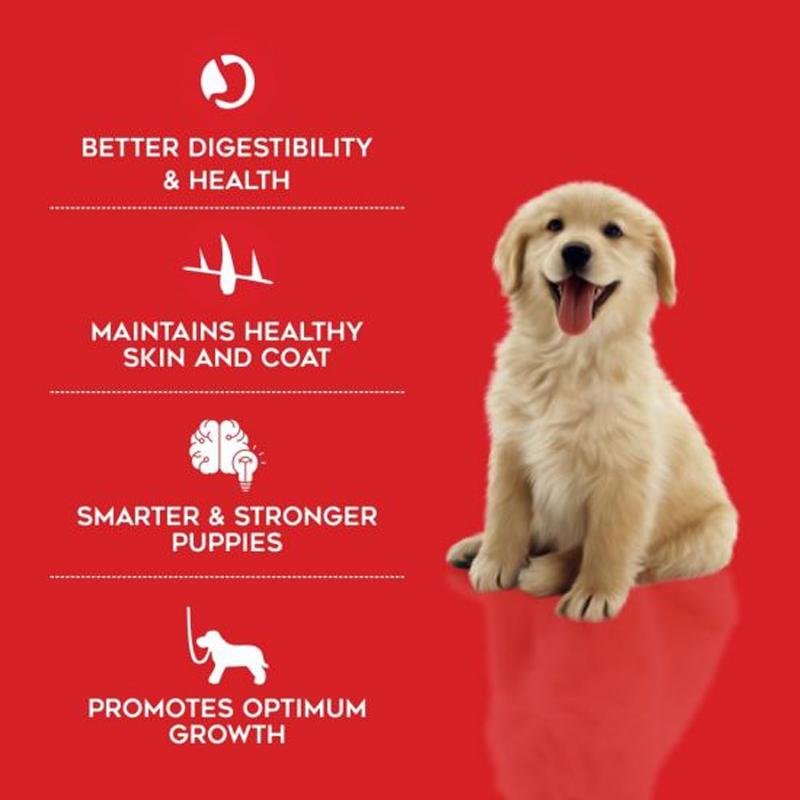 عکس تبلیغاتی غذای خشک توله سگ درولز مدل Puppy Chicken & Egg وزن 3.5 کلیوگرم