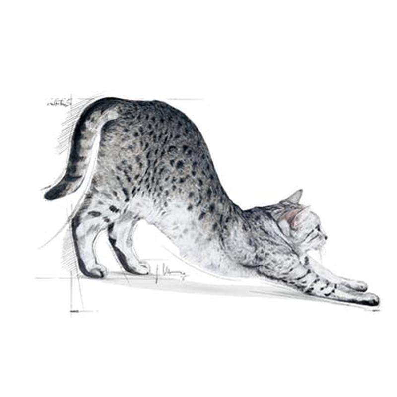 عکس تبلیغاتی غذای خشک گربه رویال کنین مدل Indoor Home Life وزن 10 کیلوگرم