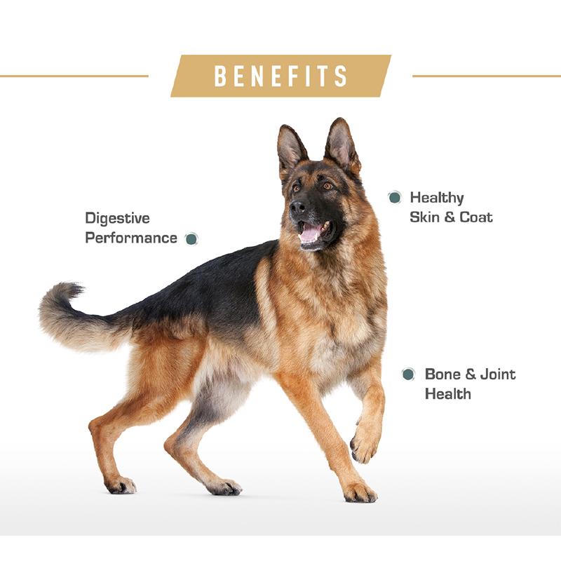 عکس تبلیغاتی غذای خشک سگ رویال کنین مدل German Shepherd وزن 11 کیلوگرم