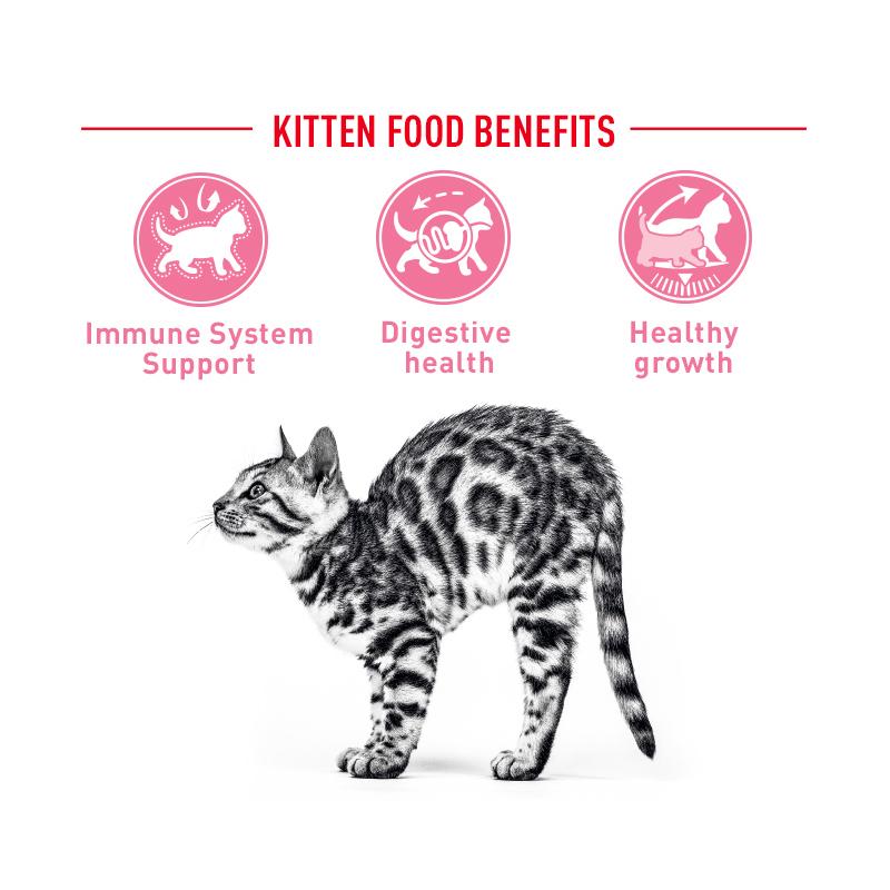 عکس توضیحات غذای خشک گربه رویال کنین مدل Kitten وزن 1 کیلوگرم