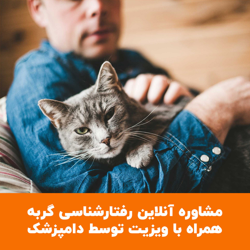 عکس مشاوره آنلاین رفتارشناسی گربه همراه با ویزیت توسط دامپزشک