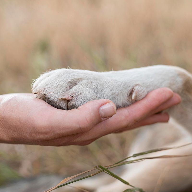 عکس غذای خشک سگ حمایتی وزن 1 کیلوگرم