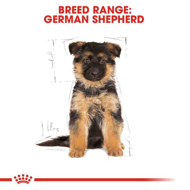 عکس تبلیغات غذای خشک توله سگ رویال کنین مدل German Shepherd Puppy وزن 3 کیلوگرم