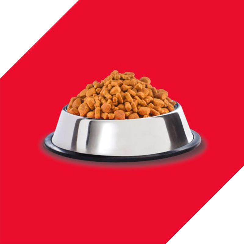 عکس دانه غذای خشک توله سگ درولز مدل Puppy Chicken & Egg وزن 3.5 کلیوگرم