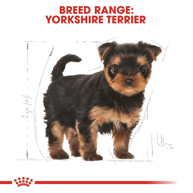 عکس تبلیغاتی غذای خشک سگ رویال کنین مدل Puppy Yorkshire Terrier وزن 1.5 کیلوگرم